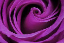 güller çiçekler