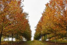 Fall Color / Take a look at all the great fall color around the farm!