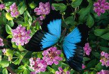 papillons magnifiques