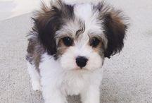 Hundar jag vill ha