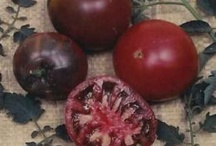 Delicious Tomatoes / by Thomas Byers