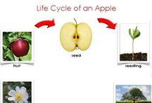 Jablkový den