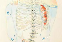 skeletons/skulls and anatomy