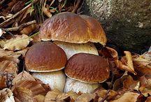 Boletus and more mushrooms