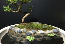 メダカと盆栽