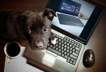 Laptop Asus Terbaru / Kumpulan laptop Asus terbaru dan terlaris yang dikumpulkan dari berbagai sumber