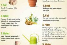 Hoe om plante te groei