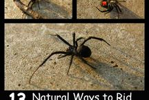 pengusir laba-laba