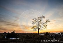 Lone tree collection