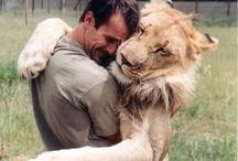 człowiek i lew