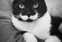 Catstache / by Tamar Arslanian