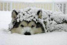Snow,snow,SNOW! / by Kris Gamil