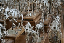 Natural History Museum of Paris / An incredible place in Paris for creative inspiration !