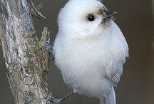 ptáci - nezvyklé zbarvení