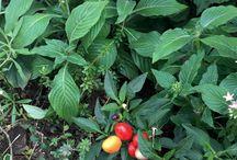 Plante / お店を彩る植栽たち