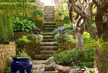 Green green garden / All color plants