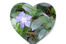 Zazzle Flowers / Wonderful flower photo and art designs on a variety of gift items you can customize.