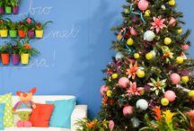 Cupcake colours / Kleurrijke toepassingen van bromelia's door bromeliaspecialist / by Bromelia Specialist