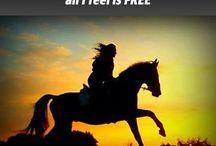 Horsecheck quotes / Leuke en grappige paarden quotes