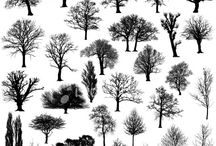 trees please / by Eric Berg