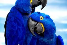 Macaw Parrots / Amazing pictures of different macaw parrots