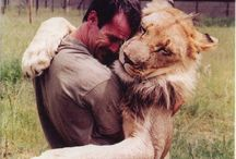 Lion Luv / by Erica Olson Huth