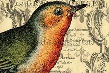 grafiki ptaki  owady