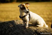 Cani / I miei Cani i miei tesori