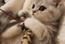 cuccioli gatti ♡
