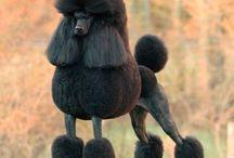 S. Poodles