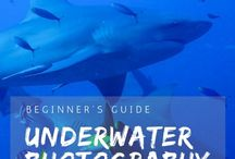 Underwater Photography / All about taking your photography underwater.