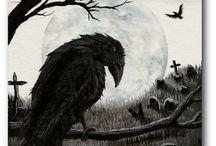 crows / by Neil Allen