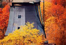 autunno/autumn