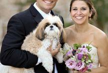 Dogs at Weddings / wedding