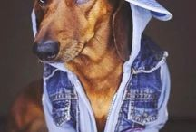 COOL DOGGG'S. WOHOO!!!