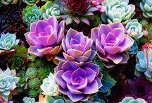 Сад, цветы