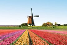 Lisse - Holland - The Netherlands / Lisse is the heart of the tulip region in Holland. The garden of Amsterdam. Keukenhof gardens are located in Lisse.