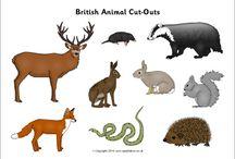 Artic animals:Theme