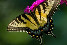 Flutterby / by Stacey L. Broder