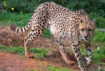 Hakuna Matata Animals