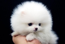 Epitome of Cutness / Some of the cutest animal images I could find.