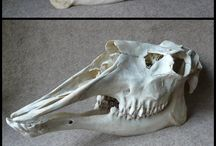Familiar Skulls / Skulls of animal familiars.