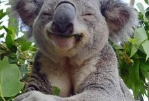 Funny Animal Captions / It is a funny animal, uniquely found in various parts of the world