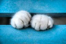 CAT/KITTEN PAWS  (SO CUTE)