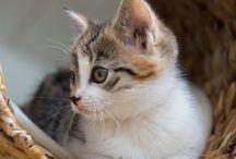 Chats et chiens mignons Sa petite bouille