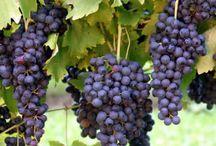 Uvas em geral