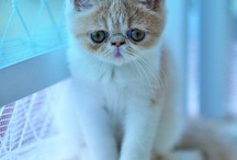 Awesome Cats / Let's face it, cats are just awesome. / by Anne