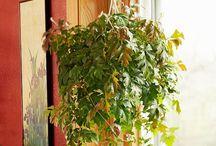 Easiest houseplants