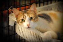 Clarisel: Pinning for Pets to Find Homes / Photos of dogs and cats that are in need of forever homes. / by Clarisel Media