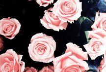 wallpaper •-•
